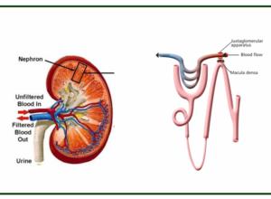 Hypertension and diuretics
