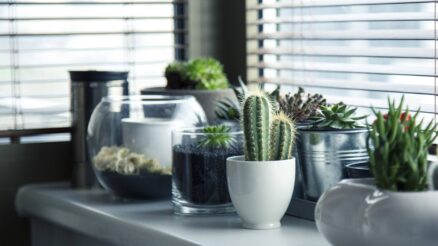 water succulents without drainage