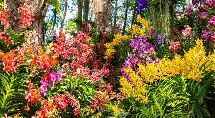 Which flowers can you plant in the garden?